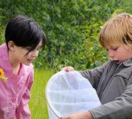 Children catching crickets